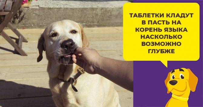 Когда и при каких заболеваниях собаке назначают Лиарсин