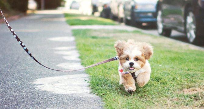 когда можно гулять после прививки щенкам