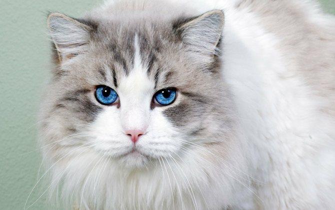 Когда отмечают день кошек в России