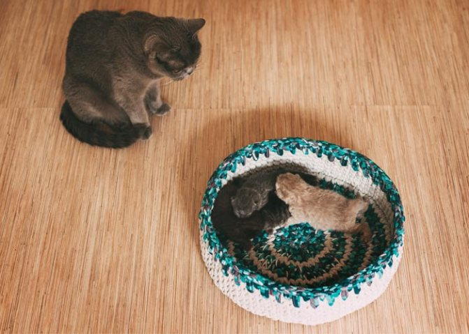Когда пора забирать котят от кошки для продажи новым хозяевам