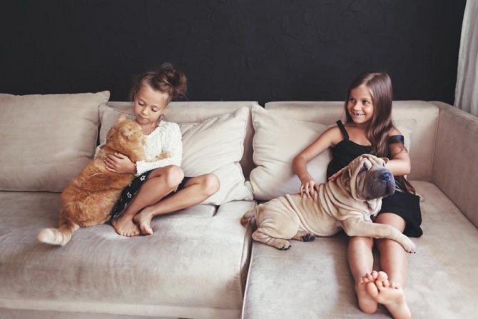 Кого лучше завести кота или собаку