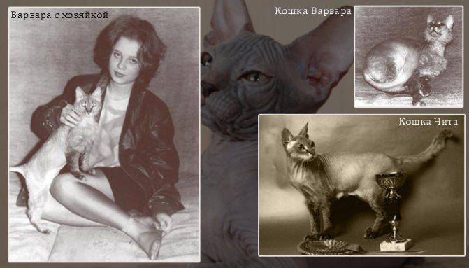Коллаж из фото кошек Варвары и Читы