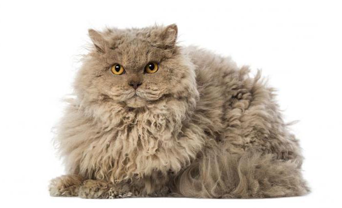колтунорезы для кошек