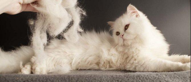 Колтуны у кошки - как избавиться?