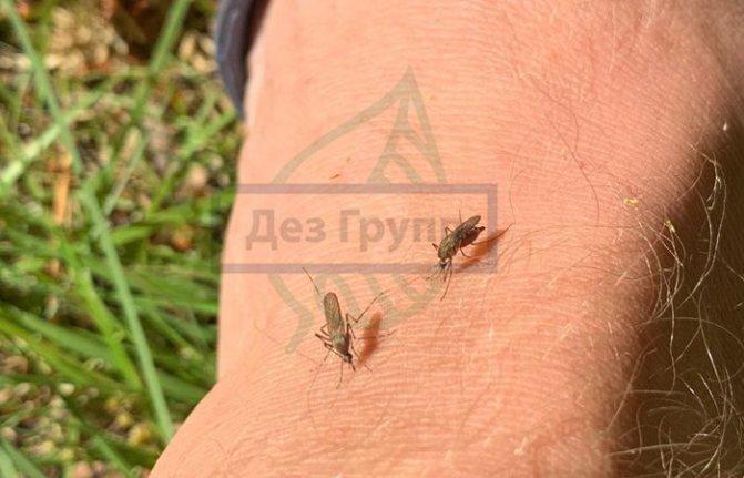 Комары являются виновниками неприятного зуда после укуса ночью