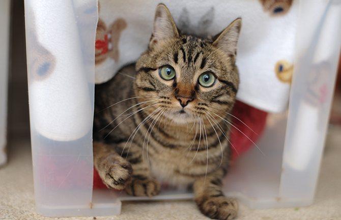Консервативные методы лечения отказа лап у кошки