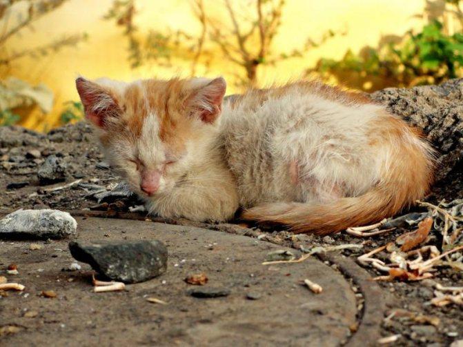 Контакт с бездомными животными повышает риск заражения, фото https://gdeprosto.ru