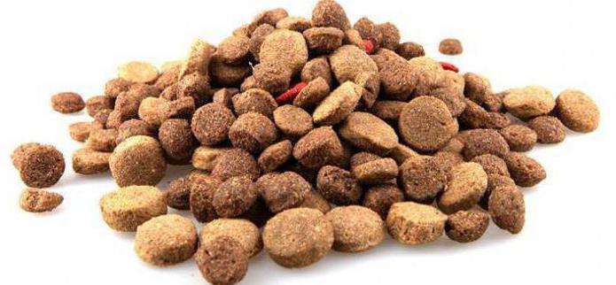 корм акана для собак отзывы
