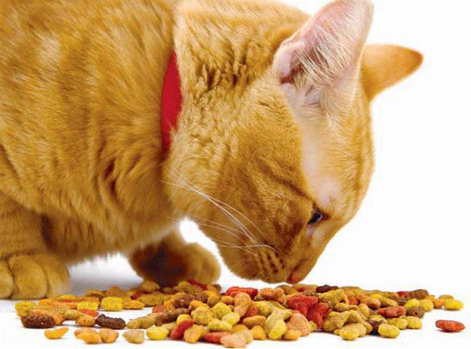 корм фармина для кошек отзывы
