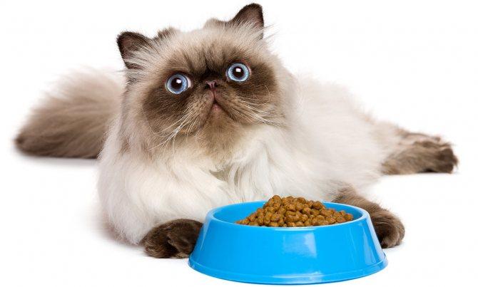 Корм персидской кошки.