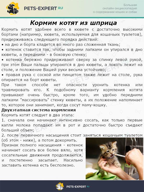Кормим котят из шприца
