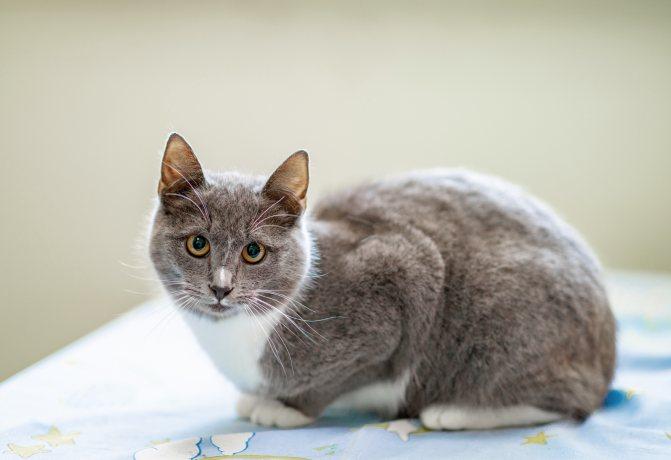 Кормить ли кошку сухим кормом или домашняя еда полезнее для здоровья? Чем вредны сухие корма?