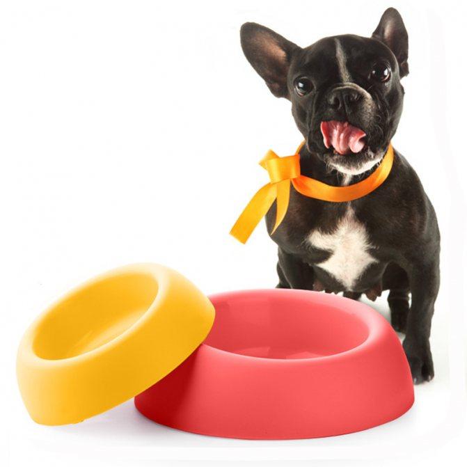 Кормление собак кормами: сухой или влажный корм?