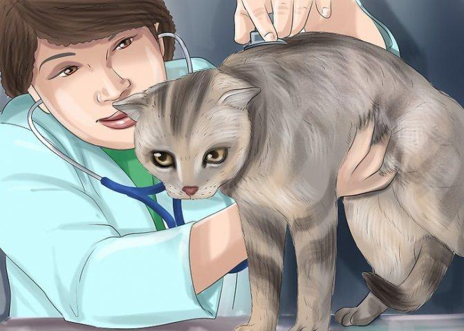 кошка беспокойная после родов