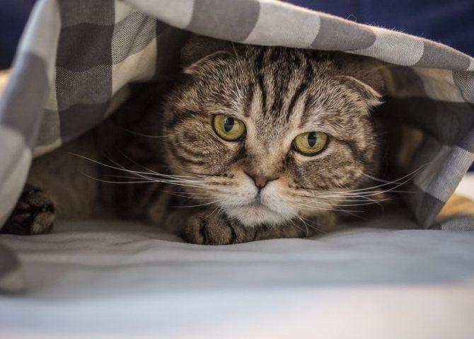 Кошка часто писает из-за мочекаменной болезни