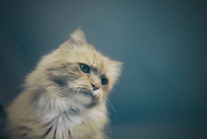 Кошка часто писает из-за почечной недостаточности