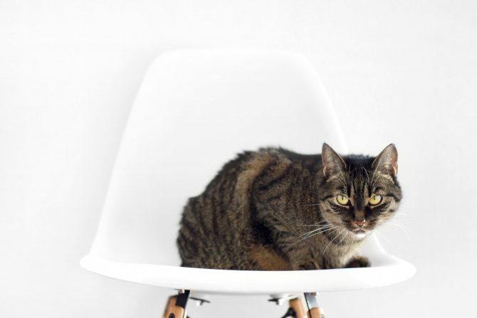 Кошка часто писает из-за стресса