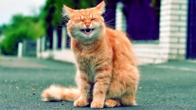 Кошка чихает и глаза слезятся: что делать, лечение, причины