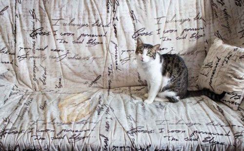 Кошка диван с пятном