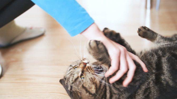 Кошка долго отходит от наркоза после стерилизации