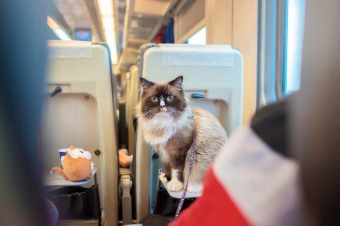 кошка едет в скоростном поезде