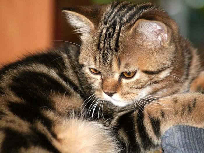 Кошка, фото фотография картинки кошек