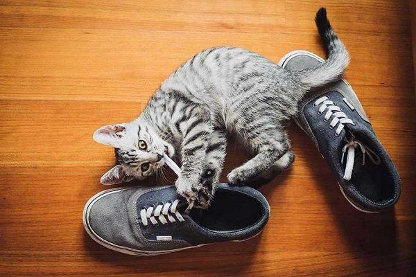 кошка грызет ботинки