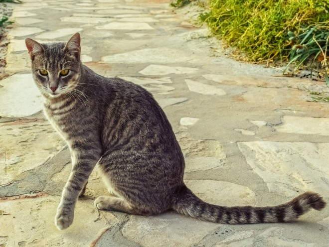 Кошка гуляет на улице