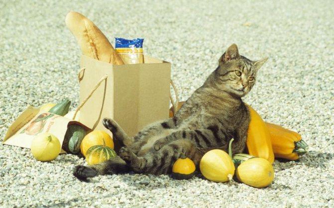 Кошка и пакет с продуктами