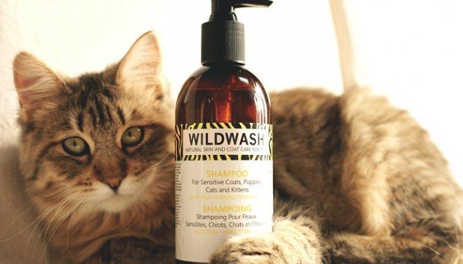 Кошка и шампунь