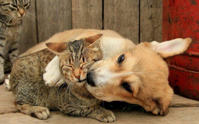 Кошка и щенок