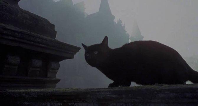 кошка и зло