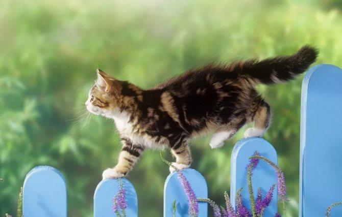 кошка идет по забору