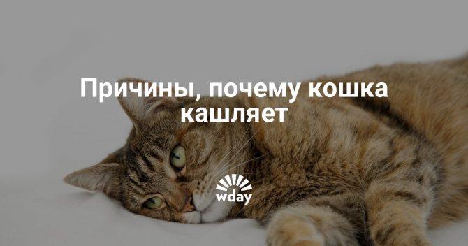 Кошка иногда кашляет