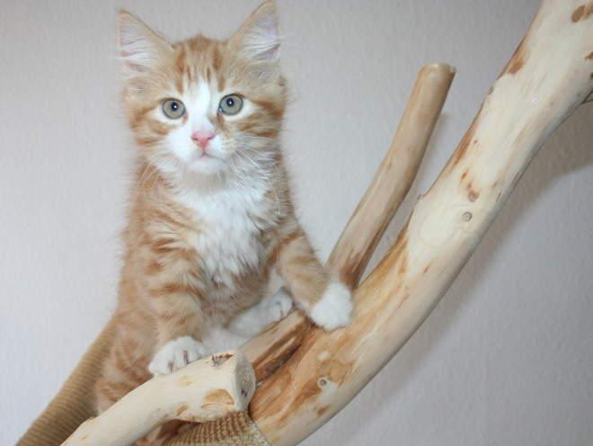 Кошка лазит по своему домику