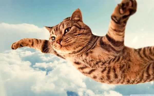 кошка летит в небе