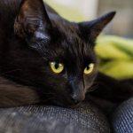 Кошка лежит на диване