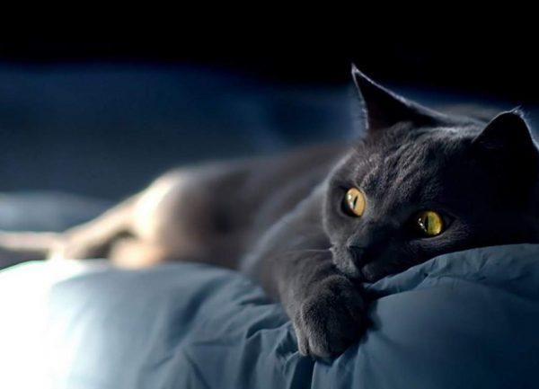 Кошка лежит в темноте на постели с открытыми глазами