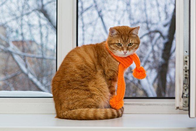 Кошка мерзнет дома