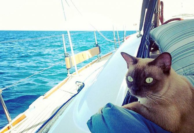 Кошка-мореход покорила соцсети фотографиями своих приключений