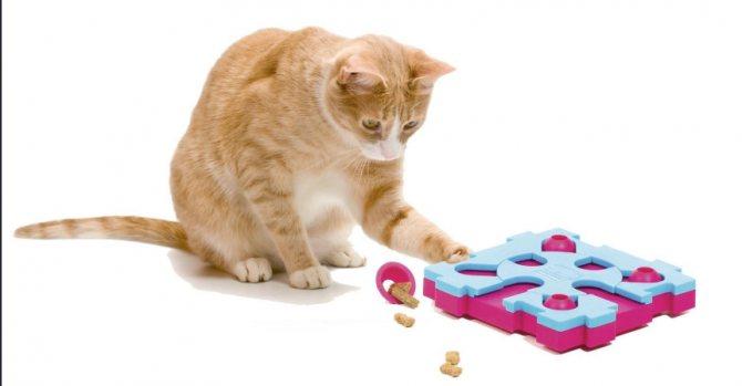 Кошка может проглотить мелкие игрушки