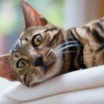 Кошка на боку