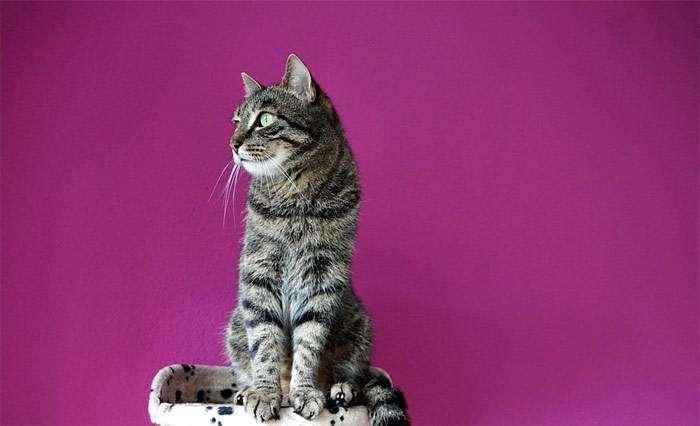 Кошка на фиолетовом фоне, фото фотография
