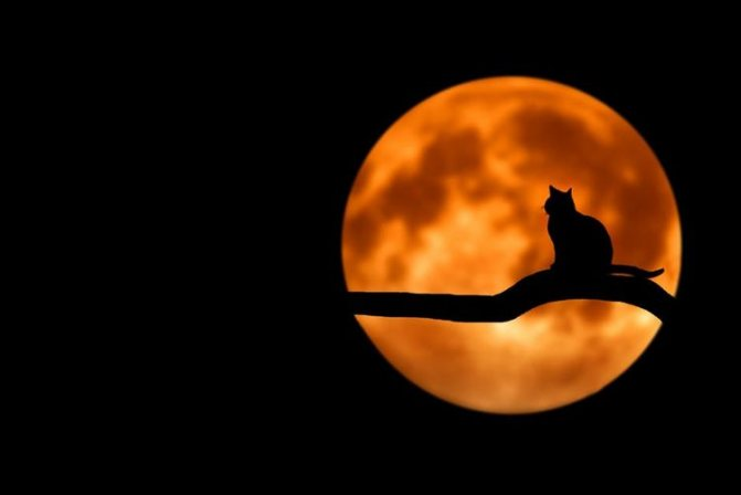 Кошка на фоне луны