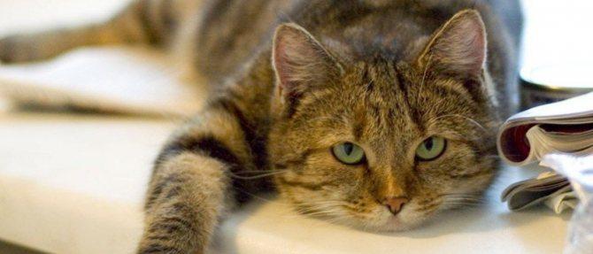 Кошка не ест после операции как помочь питомице