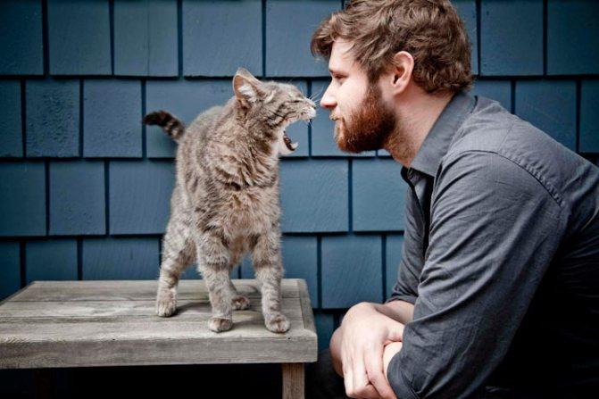 кошка не ладит с хозяином