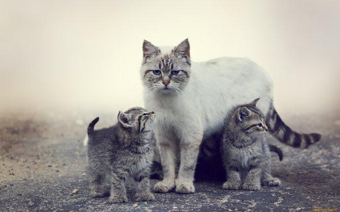 кошка не принимает чужого котенка