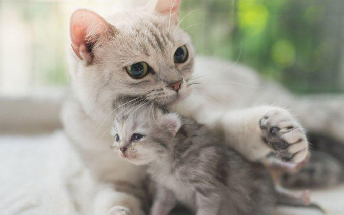 Кошка отказалась от котенка причины