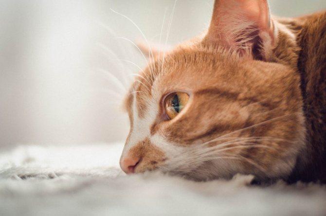кошка после родов апатичная