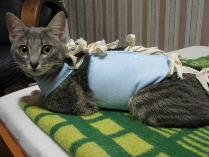 Кошка после стерилизации.jpg
